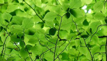 Piatti ecologici  – piatti biodegradabili e compostabili